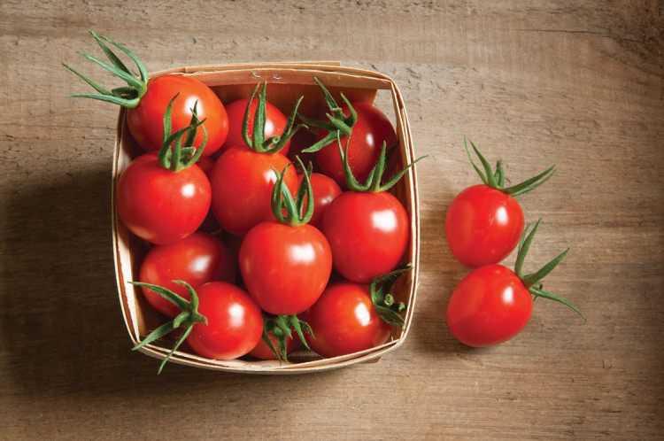7+g%C3%BCn+bo%C4%B1unca+domates+%C4%B1emenin+fa%C4%B1daları
