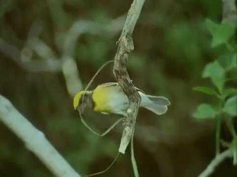 Kuşlar+%C4%B1uvalarını+nasıl+%C4%B1apı%C4%B1or