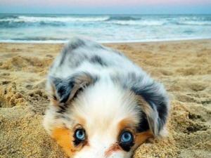 En sevimli yavru köpekler