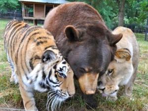 Hayvanların içinizi ısıtacak dostluğu