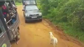 Doğa-Hayvan