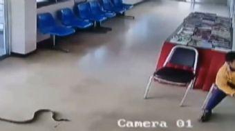 Tayland´da polis merkezine giren yılan kısa süreli bir paniğe neden oldu.