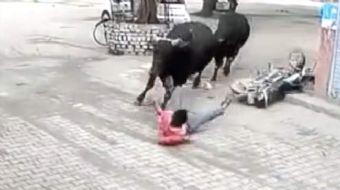 Hindistan´da iki boğanın kavgasının arasında kalan adam ölümle burun buruna geldi. Güvenlik kamerası