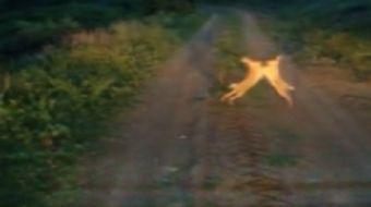 Tunceli-Erzincan sınırında iki tavşanın yol üstünde kavgası görüntüledi, o anlar tatlı enstantaneler