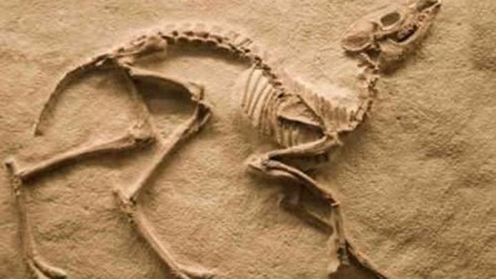 dinozor fosili ile ilgili görsel sonucu