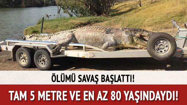 5 metrelik yaşlı timsahın ölümü savaş başlattı