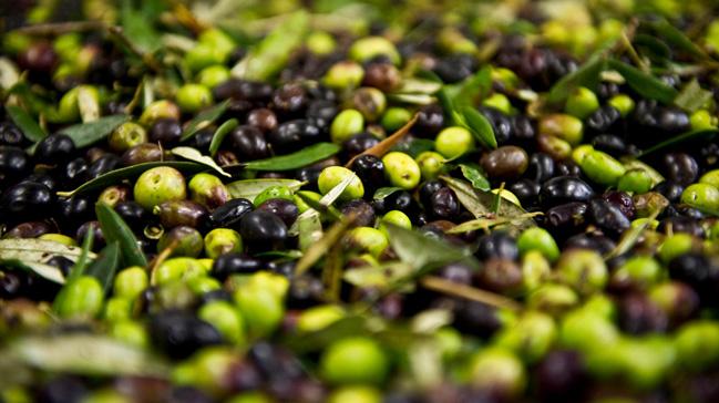 Zeytin ve zeytinyağında rekor ihracat beklentisi