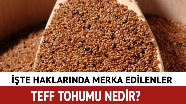 Teff+tohumu+nedir,+faydalar%C4%B1+nelerdir?+Teff+tohumu+nas%C4%B1l+kullan%C4%B1l%C4%B1r?