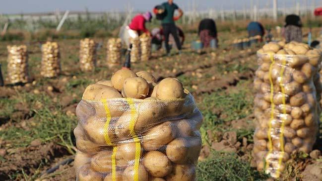 Patates+fiyat%C4%B1na+%E2%80%99yazl%C4%B1k+hasat%E2%80%99+freni