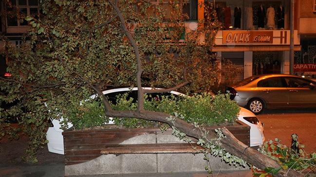 Şiddetli rüzgar ağaçları arabaların üstüne devirdi