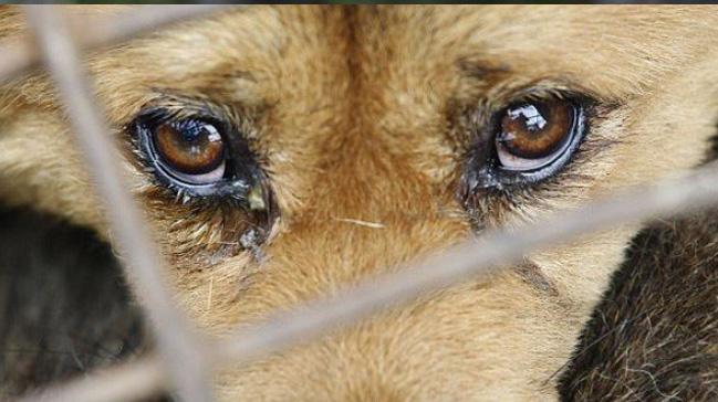 Bakan+Pakdemirli:+Hayvanlara+i%C5%9Fkence+edene+hapis+cezas%C4%B1+getiriliyor