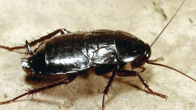 Liseli proje öğrencisi hamam böceği ve bordan radyasyon geçirmeyen yelek üretti