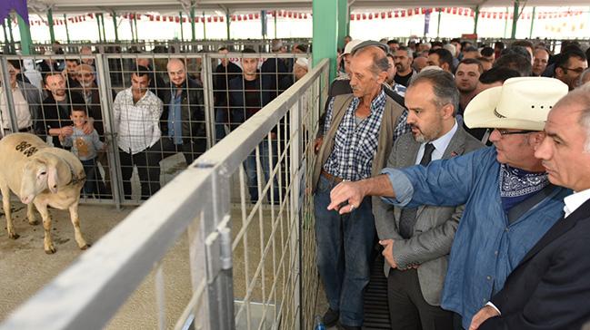 Güney Marmara'nın en büyük canlı hayvan pazarı Bursa'da açıldı