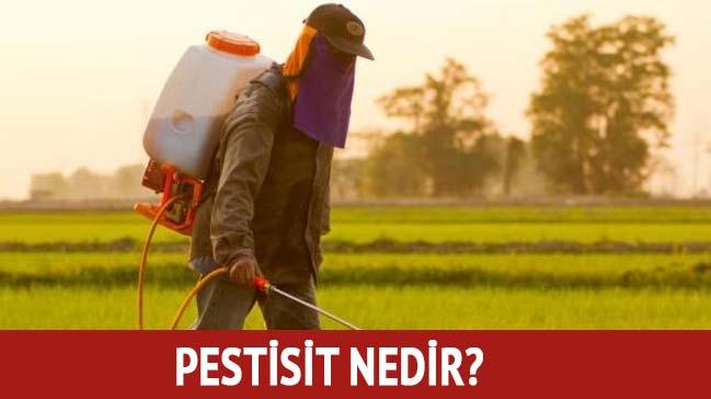 Pestisit+nedir,+ne+demek?+Pestisit+zararlar%C4%B1+etkileri+nedir?