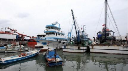 Akçakoca'da balıkçılar, 4 günde yaklaşık 500 ton hamsi avladı