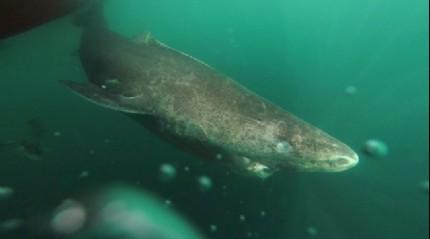 Avustralya'da köpek balığının saldırısına uğrayan genç ağır yaralandı