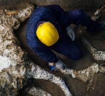 Pompeiide taşlaşmış at kalıntıları bulundu 80