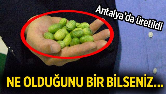 Antalya'da üretildi! Ne olduğunu bir bilseniz...