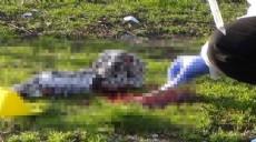 Son dakika - Bağcılar'da silahla başından vurulan kişi ağır yaralandı