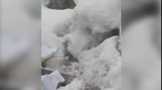 Son dakika - Beyaz gelincik, Hakkari'de de görüntülendi