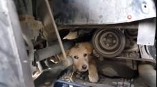 Son dakika - Arabasına sıkışan köpeği sahiplendi
